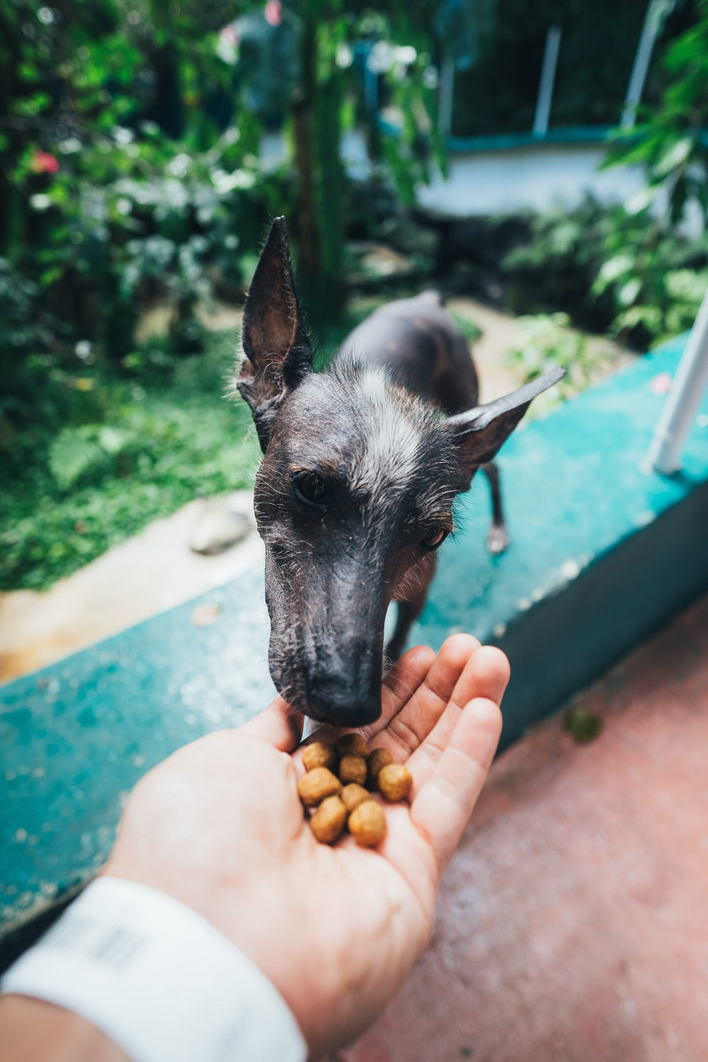 dog eating try foods
