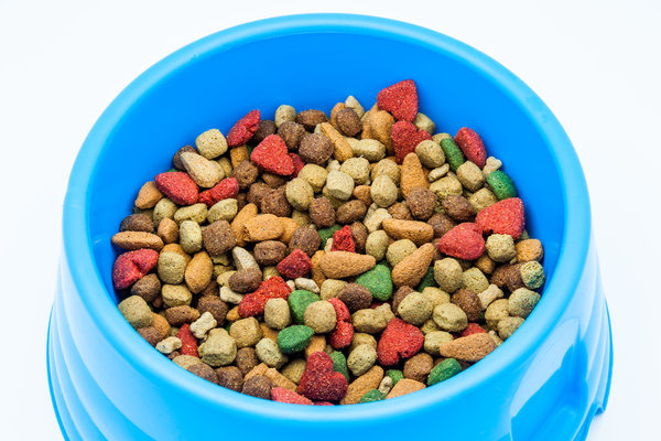 Dry dog food in a blue bowl