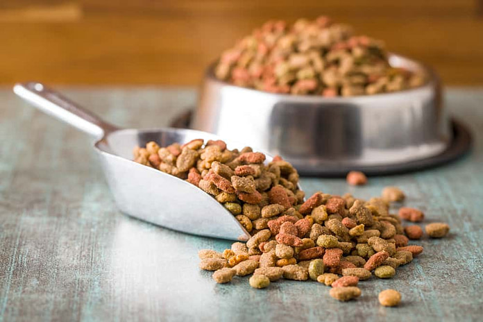Dry pet food. Dry kibble food in scoop