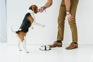 man feeding dog from hand