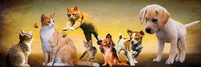 dog aggression towards cats