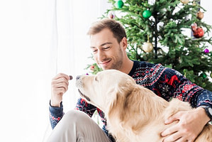 Man in christmas sweater giving dog food to golden retriever