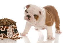 English bulldog three five and seven weeks