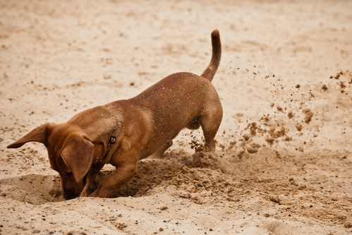 Fun Facts About Dogs: Why Do Dogs Try to Bury Their Food?