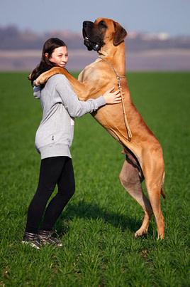 heavy dog