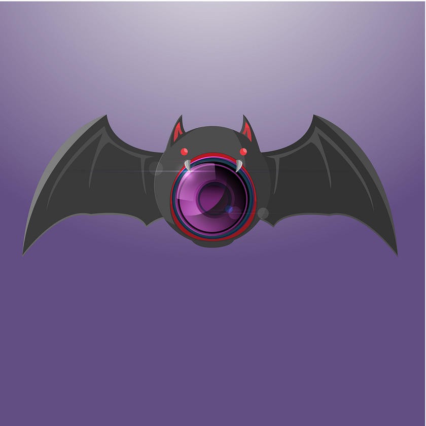 Bat Night Camera Vision